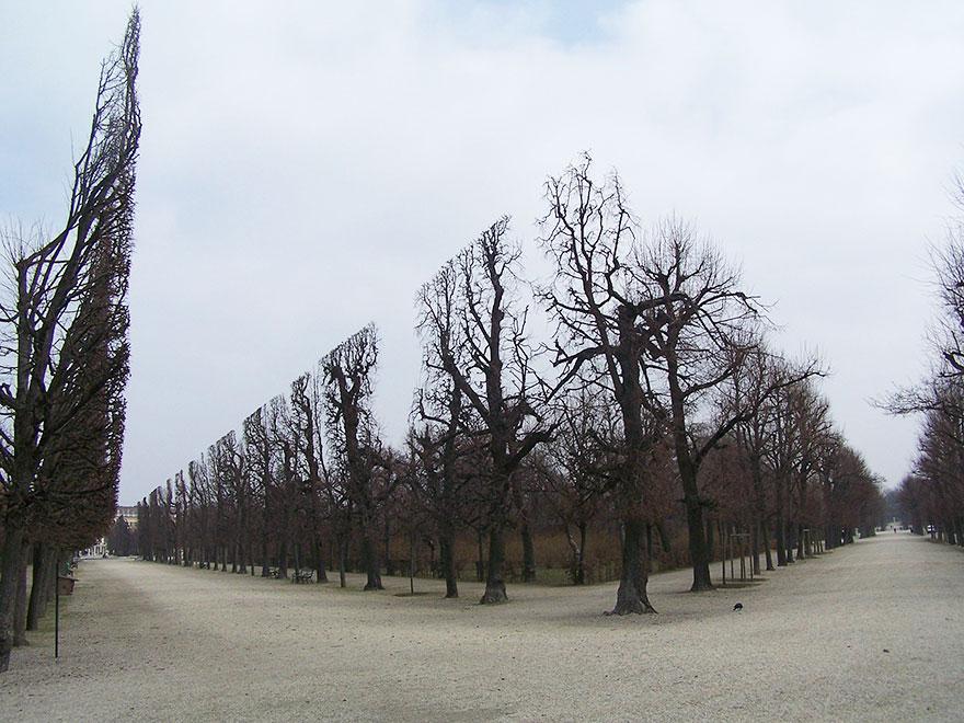 Puut Schonbrunn puistossa