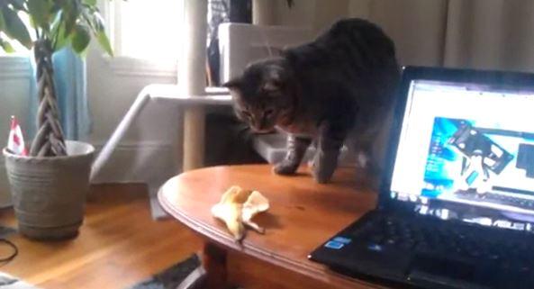 Kissojen reaktiot ruokiin