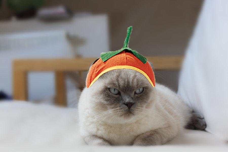 Kurpitsakissa - Halloween