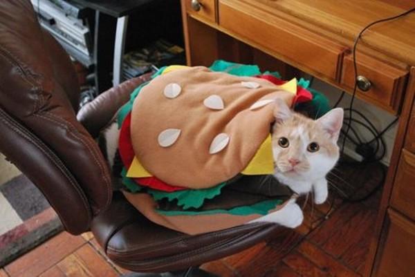 Kissahampurilainen - Halloween