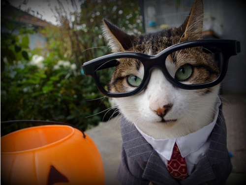 Business-kissa - Halloween