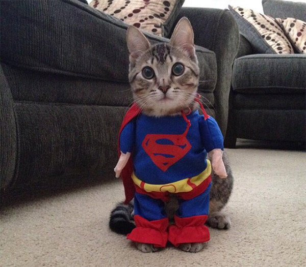 Superman-kissa - Halloween