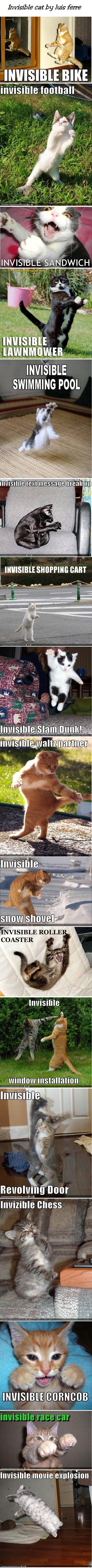 Kuvia kissoista näkymättömien asioiden kera